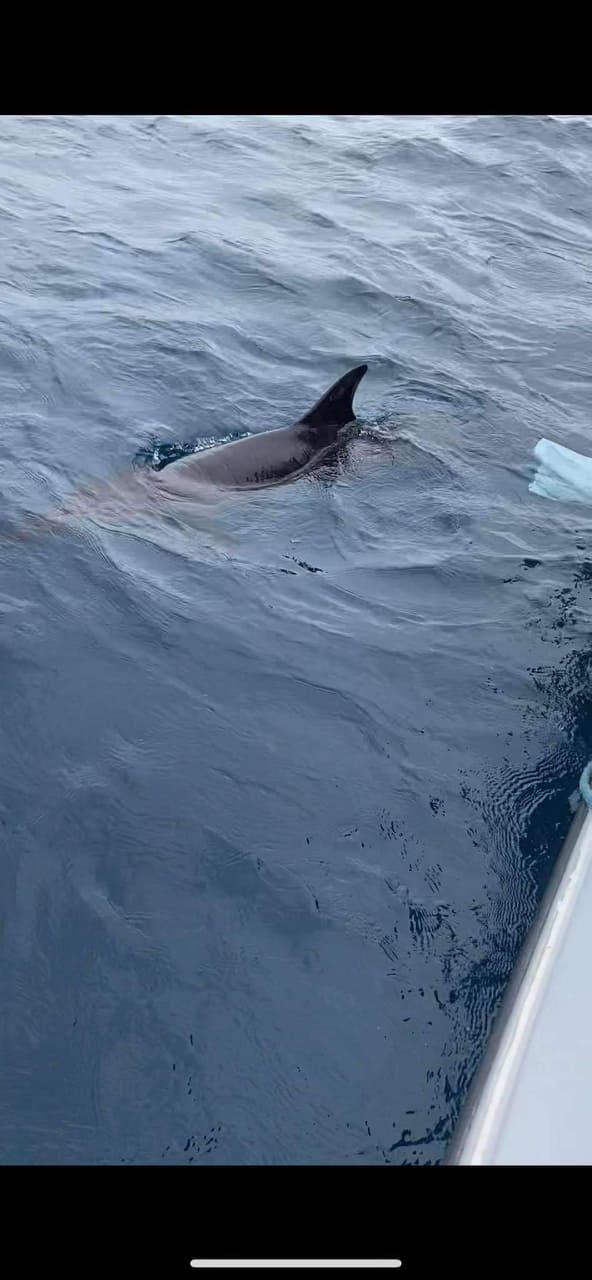 Stranded dolphin in Mandaue freed | Cebu Daily News