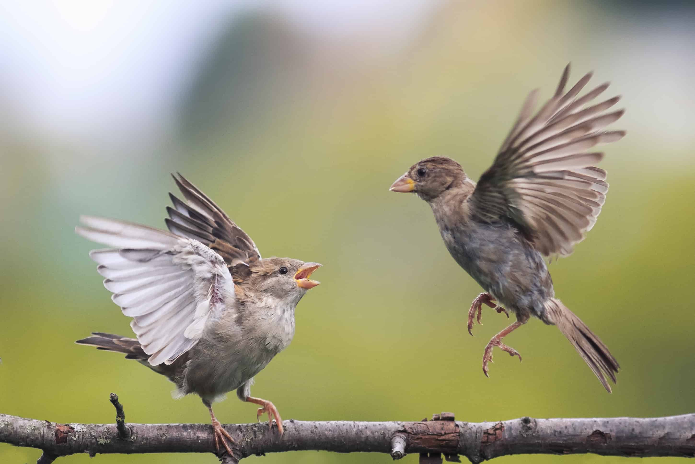 How Long Does it Take For Baby Birds to Fly ...