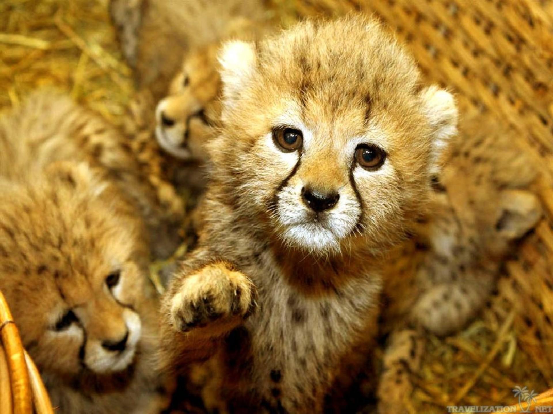 Cute Baby Animal Wallpaper ·① WallpaperTag